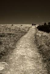 Leaving (.robbie) Tags: bw nature grass sepia walking leaving island couple path walk australia granite holdinghands toned southaustralia