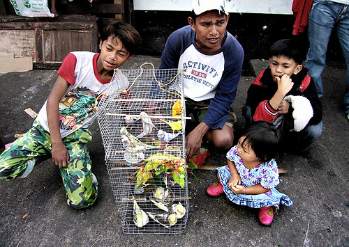 baguio pet birds vendor street sidewalk Pinoy Filipino Pilipino Buhay  people pictures photos life Philippinen  菲律宾  菲律賓  필리핀(공화국) Philippines