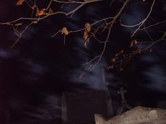 Concession  perptuit (Felipe Bachomo) Tags: paris france cemetery frankreich cementerio frana diademuertos 75 francia pars  parigi prelachaise toussaint cimetire   75020  holyfield latoussaint pariz   parizo cementerioparisino cimetireparisien cimetireparisienduprelachaise