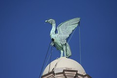 Liver Bird (Richard Carter) Tags: uk statue liverpool liverbird liverbuilding
