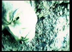 NOZ - J'empire (Abode of Chaos) Tags: portrait sculpture streetart france art mystery museum architecture painting graffiti ruins rawart outsiderart chaos symbol photos contemporaryart secret 911 apocalypse taz peinture clip container artbrut ddc sanctuary cyberpunk landart alchemy modernsculpture prophecy 999 vanitas noz sanctuaire dadaisme artprice salamanderspirit organmuseum saintromainaumontdor demeureduchaos thierryehrmann alchimie visuels artsingulier prophétie abodeofchaos facteurcheval palaisideal jempire davidcompagnon copyright20062007noz postapocalyptique maisondartiste artistshouses sculpturemoderne groupeserveur lespritdelasalamandre servergroup