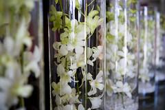 Floral centrepieces. (timijimi) Tags: wedding australia melbourne victoria vic weddingbells wwwtimherauddesigncomau timherauddesign