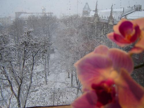 Lumipyry keskipäivällä by Anna Amnell