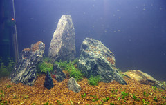 Building my planted/breeding aquarium #8 (Stu Worrall Photography) Tags: rock tank shrimp breeding t5 24 aquaruim arcadia co2 substrate planted riccia glosso stuworrall stuartworrall