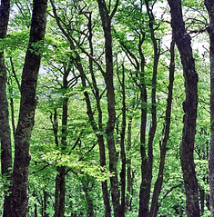 forest (boal) Tags: tree 6x6 film rolleiflex forest arbre drome moyenformat epsonv700