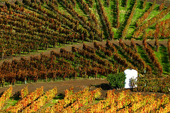(PauloSantos) Tags: autumn portugal canon colours 500v20f wine 100v10f pi vineyards douro 500v f23 portowine eos30d