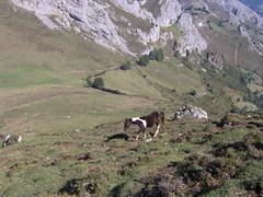 Pea Mea 016 (Caxgalines) Tags: horses caballos asturias senderismo mea pea