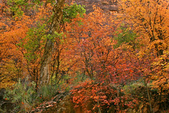 Sorry For The Mess (Beefus) Tags: autumn trees red vacation tree fall nature yellow landscape utah maple ut scenery paint fallcolors humor explosion oops zion spraypaint zionnationalpark rangers naturescenes mybad chromaticlysm