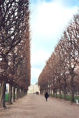 Jardin du Luxembourg (jglsongs) Tags: trees paris arboles jardin parijs parigi luxembourggardens visittheworld pary   pa   pariz   visittheworldthetravelguide paryius jglsongs     pariisiin