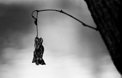 Dead nature (hector_cbs) Tags: deadnature nature leaf naturaleza