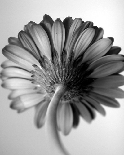 Sepia Flowers · Black & White Flower