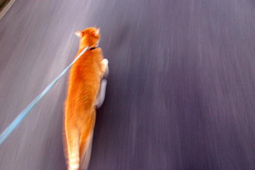 run! run! run!