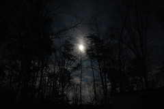 My back yard (Dr. Allcome) Tags: trees winter sky moon night outside flora forrest luna