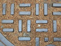 = || = pine needles = || = (Zombie37) Tags: street lines metal pine geometry details shapes manhole lookingdown needles simple sewer mundane outerspaces haphazartbreaktheruleofthirds haphazartmetal haphazartshootupdown outerspaces2012bakersets