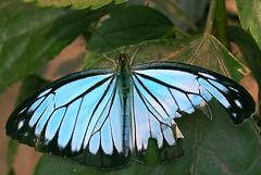 An aging butterfly
