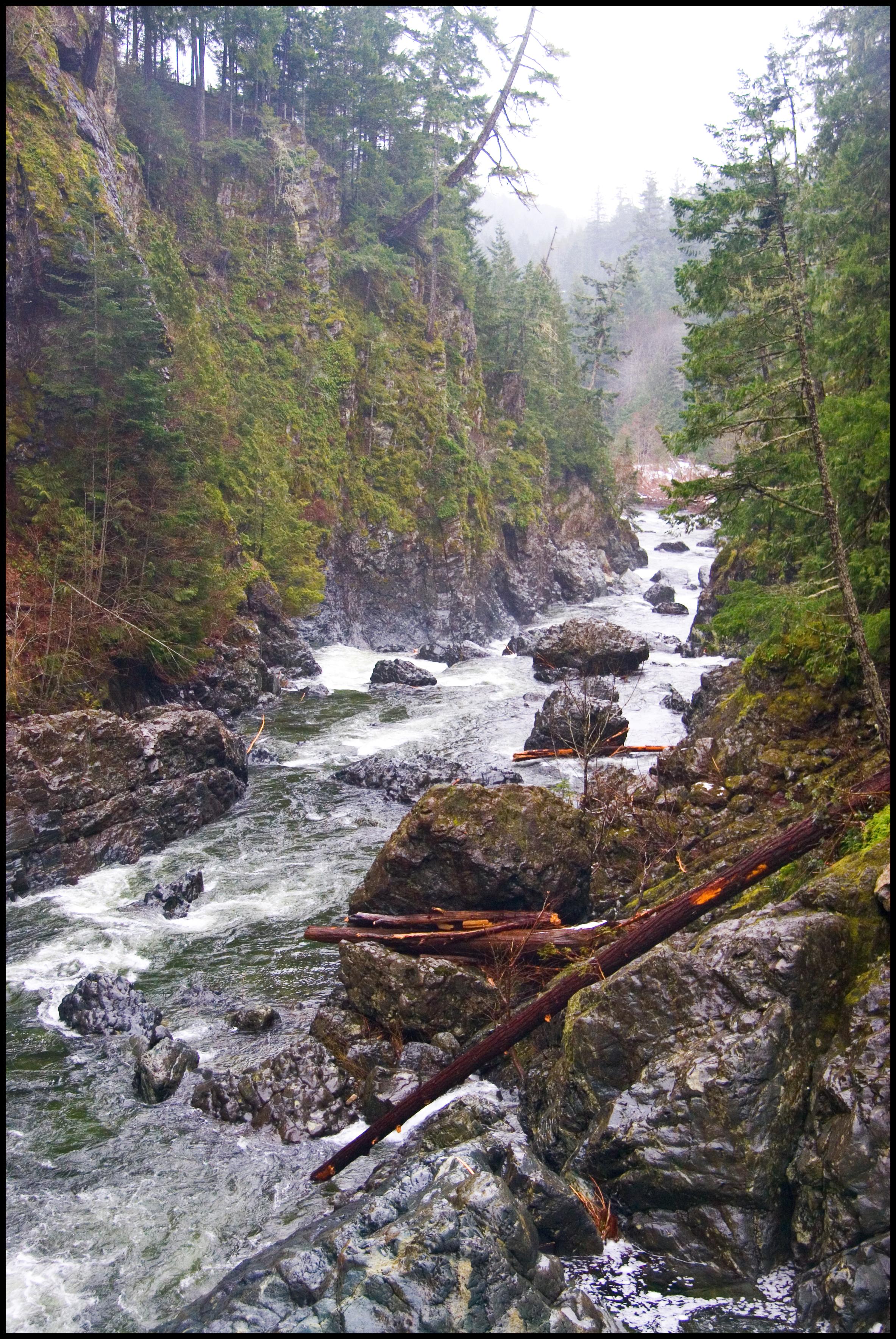 Sooke River, Vancouver Island, BC, Calypso Orchid攝