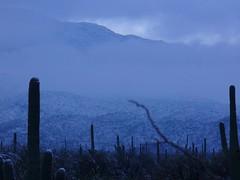 looking at the Rincon Mountains (DesertBat) Tags: snow tucson saguaronationalpark rincons