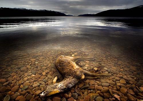Surface Interruption-Loch Ness