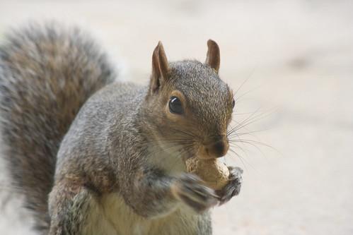 feeding squirrels  - 017