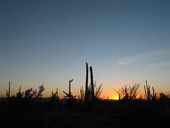 Saguaro National Park (Carol Fil) Tags: arizona saguaro saguaronationalpark