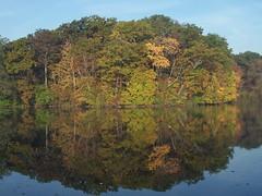 An Autumn Mirror (makeupanid) Tags: autumn toronto colour fall reflections highpark mirrored duckpond payitforward obsessiveflickrites justmeandmycamera liberolibersofficialgroup fallincanada