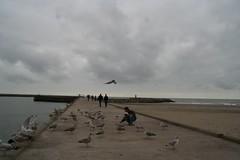 20061008_0088 (dejuffies) Tags: meeuwen kraai