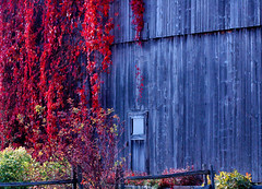Foliages and textures (Julien Robitaille Photographie) Tags: autumn red barn automne farm textures ferme charlevoix abo stlawrenceriver foliages feuillages icecanoeracing julienrobitaille ilseauxcoudres