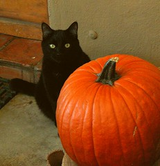 Black Cat Pumpkin (cobalt123) Tags: autumn arizona orange black fall home halloween phoenix cat blackcat catchycolors fallcolor seasonal tan vivid prince orangeset mytop100 qarizona