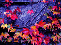 My lost passion 1 (ayat83) Tags: autumn canada love nature topf25 wall vancouver emotion ubc passion emotive 25faves flickrplatinum raziks20