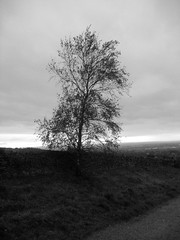 Solitary.... (Matt_Steele1977) Tags: england blackandwhite tree north wernethlow instantfave instantfav