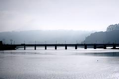 501 (sul gm) Tags: bridge espaa water birds fog ro river puente spain agua asturias aves niebla sella patos ribadesella cormorn nades salgm
