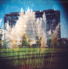 Office building (Andrea [bah! la realt!]) Tags: flowers milan building film nature mediumformat holga doubleexposure milano toycamera squareformat vignetting interestingness42 i500 viabazzi loditibb industrialmemoriespark top20milano address:country=italy address:city=milano film:iso=400 cvt40 film:format=120 camera:model=holga120gfn film:type=negative film:name=kodakportra400vc publication:url=httpwwwmetronewsit address:city=milan publication:url=httpwww02blogitpost526milanouelwmilanoritrattada600fotoamatori lifetravel