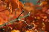 Twig (mdunham44) Tags: fall bokeh marymount top20bokeh top20bokeh20