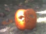 11-01-06_1442 (Steve Grabe) Tags: halloween pumpkin jackolanterns sierramadre