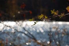 Blurred Reflections (noahg.) Tags: blue red sun blur reflection tree green slr water leaves digital catchycolors blurry nikon branch dof zoom bokeh kitlens af nikkor dslr november3 zoomlens autofocus nikkorlens d80 top20bokeh noahbulgaria abigfave nikond80 nikkorkitlens afsnikkor18135mm13556ged