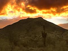 Saguaro Sunset (jimhankey) Tags: park sunset ar