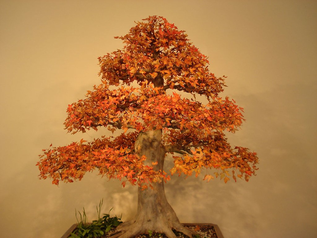 Bonsai with fall foliage.