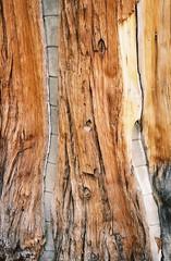 Texture (Grahambones) Tags: tree laketahoe treetrunk sugarpinepoint