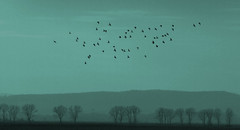 Wings of Desire (AIeksandra) Tags: serbia birds melanholic contemplation landscape dreams flying balkans dreaming thoughtful wondering wandering solitude emotions silence