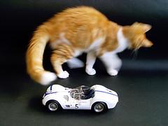Birdcage (Photomechanica) Tags: cats birdcage gatos maserati 118 cmc diecast