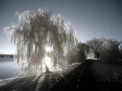 will (zachstern) Tags: trees wallpaper tree canon landscape ir arbol tr boom willow rbol infrared  albero tre puu arbre rvore potomacriver strom baum trd  infravermelho copac infrarot  ircamera  drzewo   stablo infrarrojos   infrapuna infrarood infrarouge  outstandingshots infrarossi  abigfave outstandingshotshighlight  s30ir anawesomeshot aplusphoto  inframerah    zexplored  infravrs infraerven