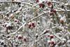 Winter 2016 (Beaty Biodiversity Museum) Tags: snow beaty biodiversity museum ubc vancouver 2016