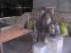 Macadamia nut handmade sheller San Miguel Dueñas Antigua Guatemala volunteering images photos Latin America
