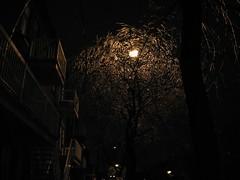 Freezing Rain (Humanoide) Tags: winter canada ice night montral quebec montreal hiver qubec nuit glace freezingrain kakadoo newphotographer pluieverglaante