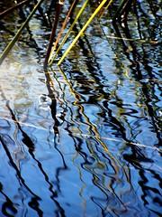 Okavango Delta Reflections - Botswana (geoftheref) Tags: africa travel mer lake water reflections de mar interestingness amazing interesting meer flickr mare desert delta safari afrika botswana kalahari mokoro okavango pictureperfect damncool smorgasbord masterclass 여행 áfrica lafrique blueribbonwinner supershot amazingtalent amazingshot flickrsbest ngami 아프리카 fineartphotos masterphotos abigfave geoftheref overzees nikoniste platinumphoto anawesomeshot impressedbeauty flickrbest dellafrica ultimateshot flickrplatinum ultimatshot superbmasterpiece naturefinest infinestyle diamondclassphotographer flickrdiamond ysplix ilovemypic сафари masterphoto overtheexcellence afrikasafari африки theperfectphotographer 원정 naturemasterclass natureelegantshots τησ awesomeblossoms σαφάρι αφρικήσ アフリカのサファリ goldenvisions