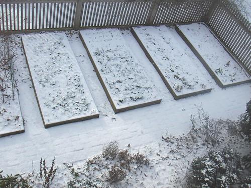 snowy garden on  January 22, 2007