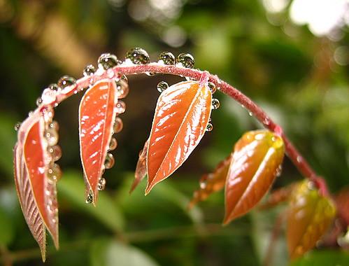Cho hy vọng long lanh nảy mầm - The bracelet of Spring