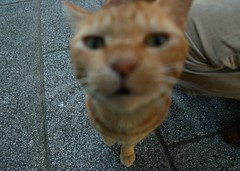 What doin ? (shinnygogo) Tags: japan cat kitty kanagawa hakoneyumoto yumoto sounji lolcats