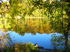 MCNEELY LAKE KENTUCKY ( with lone mallard) (JAMES HALLROBINSON) Tags: lake fall autum mallard drake solitary coolest mcneely