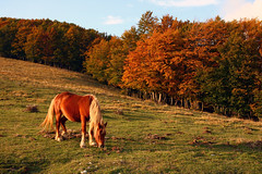 Autumn's Colors (Simone Tagliaferri) Tags: autumn horse nature landscape peace patterns wildlife tranquillity xti 400d nountain